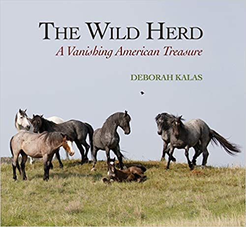 Deborah Kalas Tells the Stories of Wild Horses via Photos